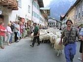 BAUERNWOCHEN: Schafabtrieb und Schafprämierung