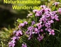 Naturkundliche Wanderung (mit Kräuterkunde) mit Frau Petra Zurwesten