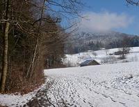 In die weite weiße Welt: Schneeschuhtour