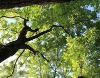 Sanfte Heilkraft der Bäume - Natursommer im Loisachtal