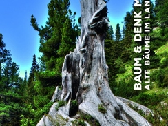 Baum und DenkMal! Alte Bäume im Landkreis