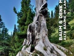 Baum & Denk mal! Alte Bäume im Landkreis