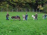 geführte Eselwanderung - Tyrolsberger Ahnt