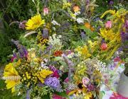 Kräuterbüschel aus dem Hildegard-Heilpflanzen-Garten für die Kräuterweihe an Maria Himmelfahrt