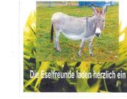 geführte Eselwanderung; Wald- und Wiesentour