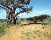 Interkulturelles Forum - Land & Leute - Somalia