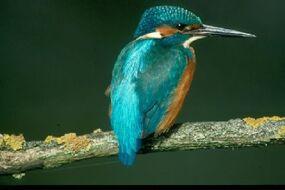 Vogelbeobachtung im Klosterland