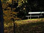 Energetische Verwertung von Restbiomassen des Kasseler Bergparks