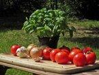 Junges Gemüse - ein Kinderkochkurs