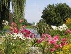Blüten in Hülle und Fülle: Sommerblumen