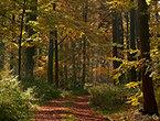 Abenteuer Herbstwald