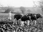 Nicht nur für's Kleinvieh: Die Rolle der Frauen in der Landwirtschaft