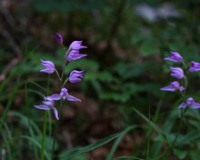 Natura 2000 - Wo in Bayern Europas schönste Naturräume zuhause sind
