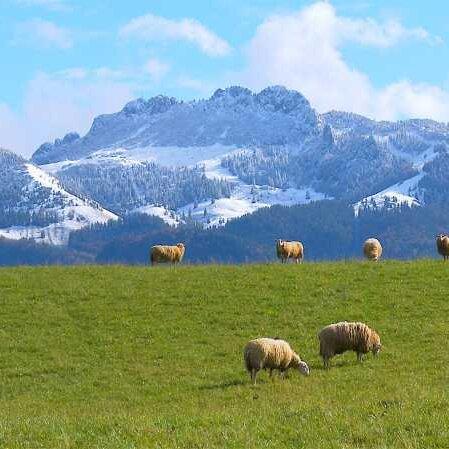 """""""HEIMAT 46° 48° N - Chiemsee, Chiemgau, Alpenland"""""""