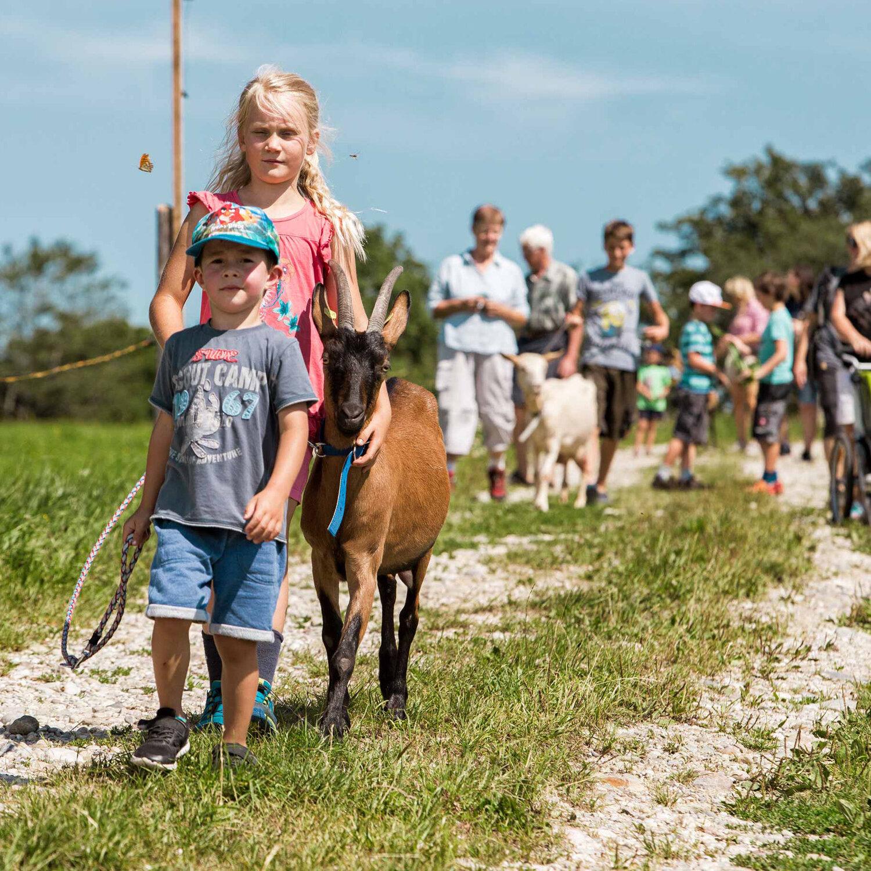Wandern mit Ziegen