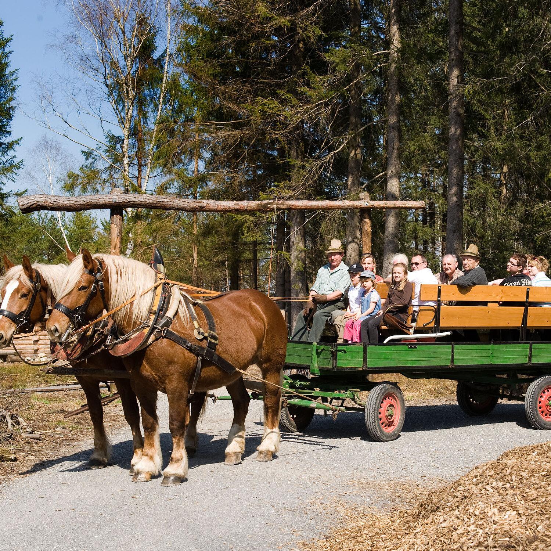 VORÜBERGEHEND ABGESAGT - Kutschenfahrt zur Moor Erlebnisstation Sterntaler Filze