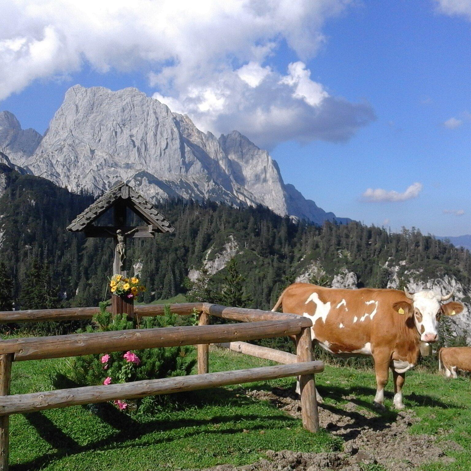 Geführte Natur- und Almenwanderungen im Bergsteigerdorf