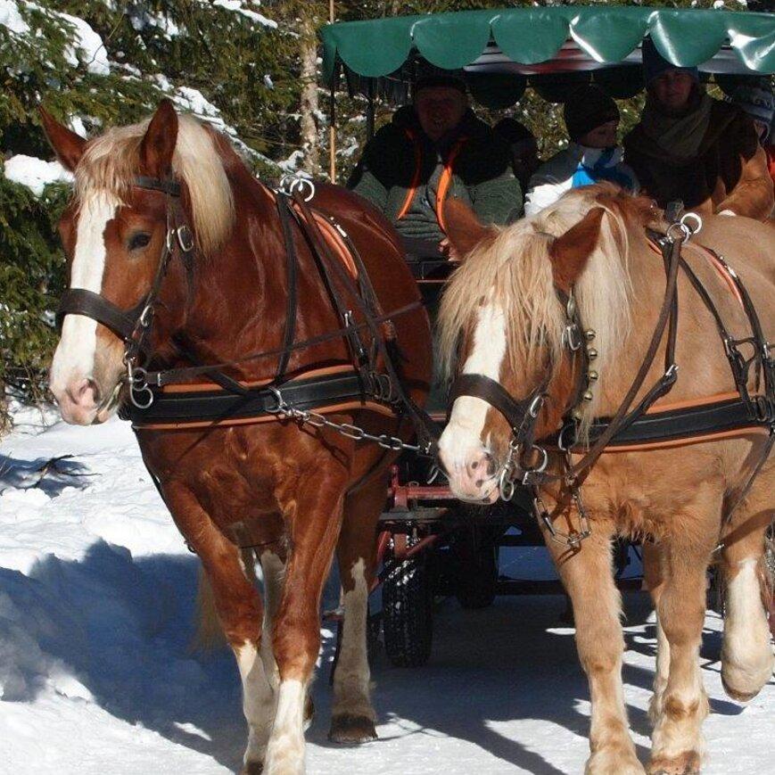 Pferdefahrt zur Wildfütterung
