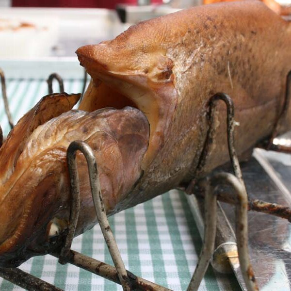 Frische Gebirgsbach-Forelle aus dem Räucherofen