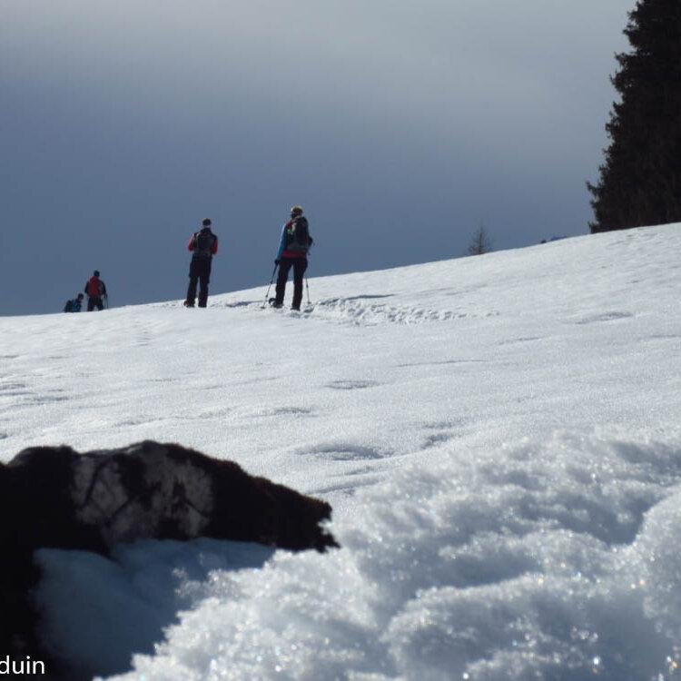 Gesundheits-Schneeschuhwanderung Rossfeld