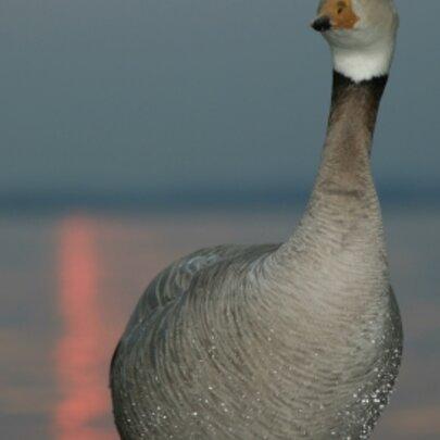 Geführte Vogelbeobachtung