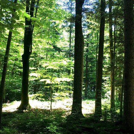 """Shinrin Yoku - """"Waldbaden"""" Heilwanderung"""