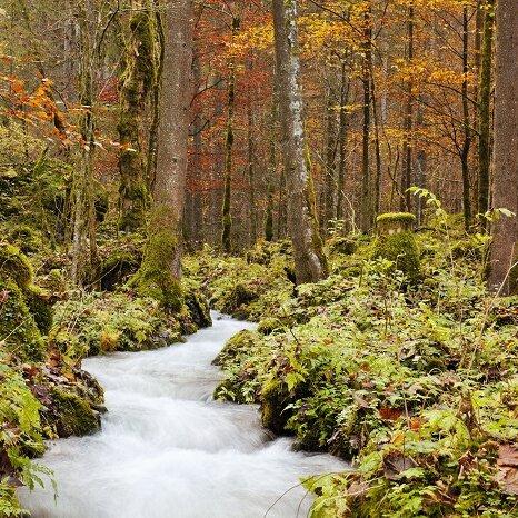 Wundersames Waldgeflüster