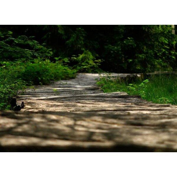 Wanderung durch den Erlebnis-Moorpfad
