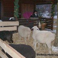 Lebende Krippe mit Weihnachtsbasar im Sinnesgarten/Caritas Haus Christophorus
