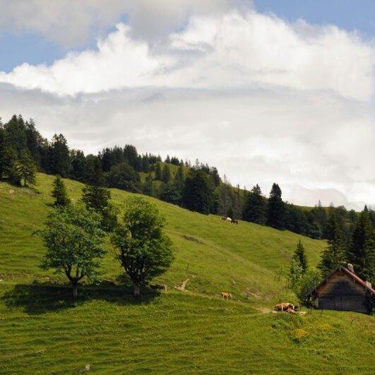 Geführte Wanderung zum Ursprung des Auerbaches