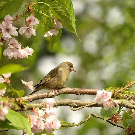 Vogelstimmen im Garten