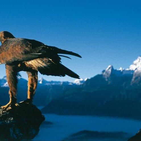 Im Tal der Adler