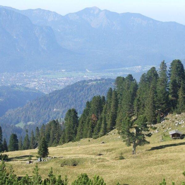 Naturwaldreservat Wettersteinwald - Bergurwald vor grandioser Kulisse
