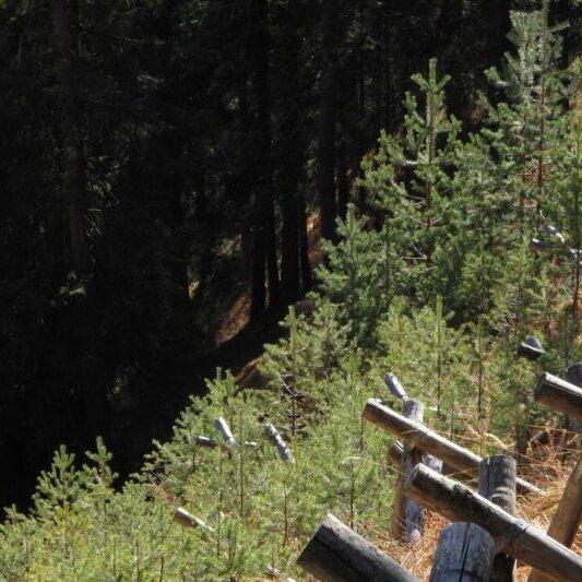Schutzwald am Ettaler Berg - Wie Bergwald Leben schützt