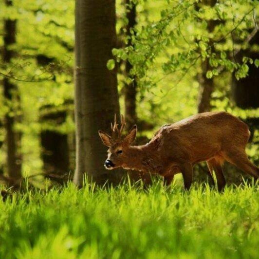 "Bücherrallye 2018: ""Unser Wald"""