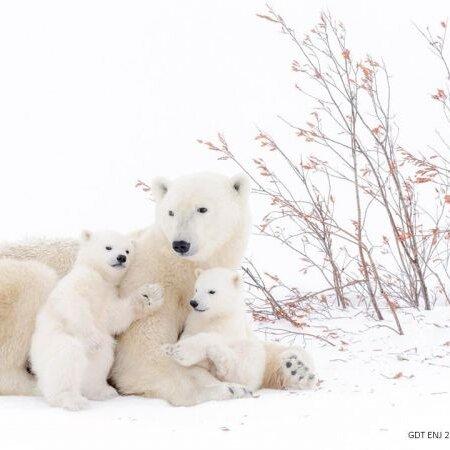 Europäischer Naturfotograf des Jahres 2017