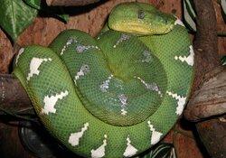 Die blaue Nacht im Reptilienhaus