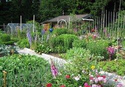 Besichtigung und Ernte im Vereinsgarten in Altenau