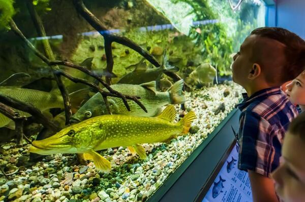 Hecht & Co. im Aquarium des Naturkundemuseums Potsdam (© Naturkundemuseum Potsdam/ Foto: D. Marschalsky) | Naturkundemuseum Potsdam