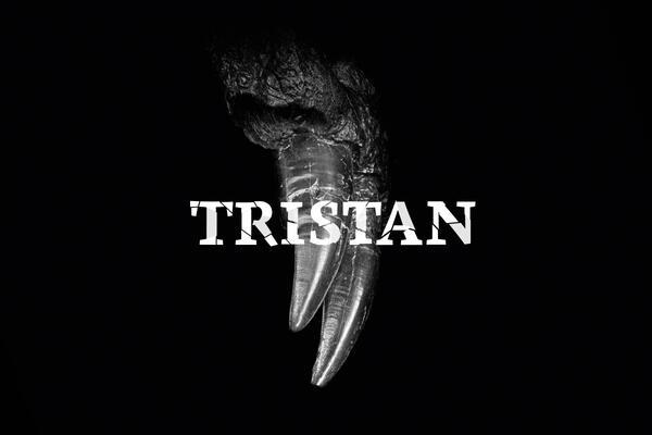Tristan – Berlin zeigt Zähne   ©MfN