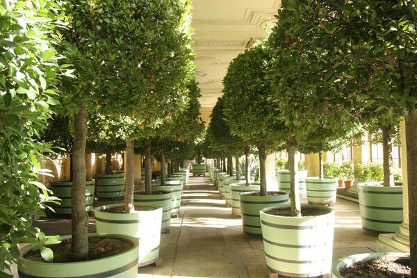 Potsdam, Sanssouci, Orangerie: Pflanzenhalle mit überwinternden Pflanzen | © SPSG