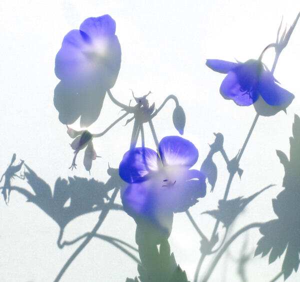 Kreative Pflanzenfotografie: Fotoseminar im Botanischen Garten Berlin | © Fotoschule des Sehens