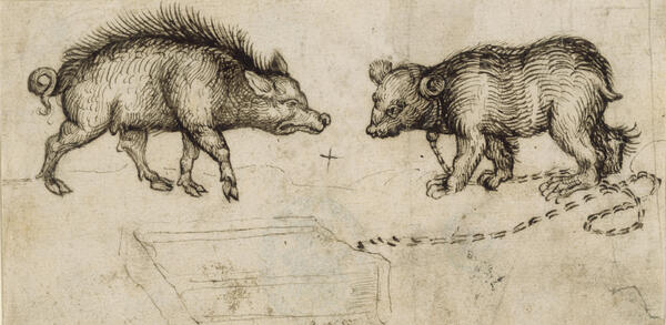 Martin Schongauer, Eber und Bär, 1491.  Feder, Tusche | © Staatliche Museen zu Berlin, Kupferstichkabinett / Volker-H. Schneider