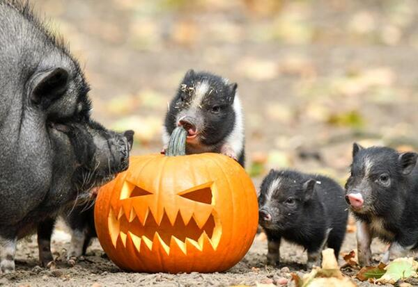 Halloween | Tierpark Berlin