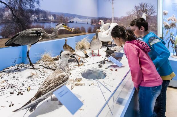 Tierisches Leben im UNESCO-Welterbe