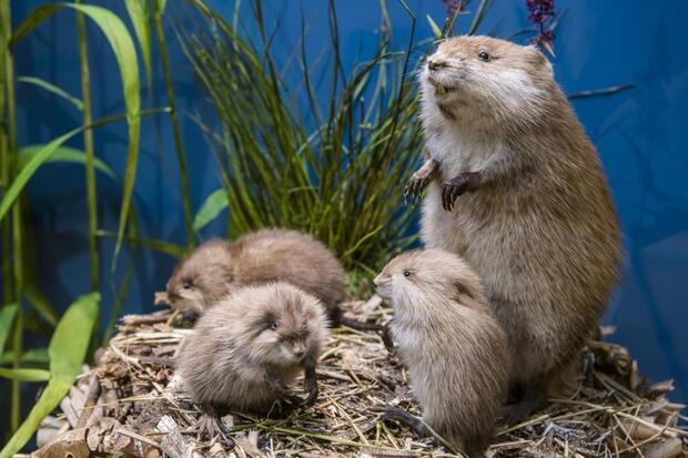 Öffentliche Familienführung: Mutige Tierkinder