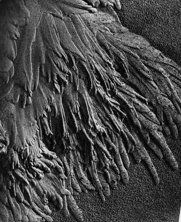 Spuren fließenden Wassers im Sandboden, Watt | bpk / Alfred Ehrhardt Stiftung